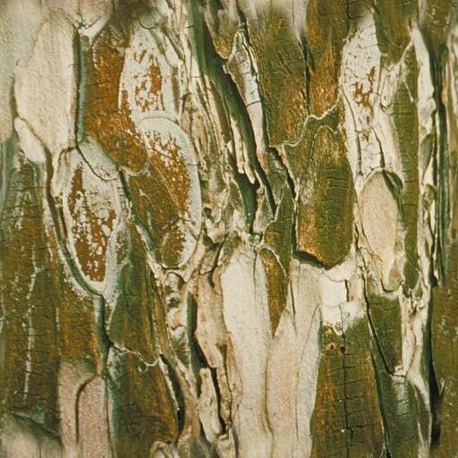 其它木纹壹叁玖素材图片