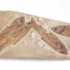 化石贴图材质素材图片【762】