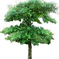 特色树木图片