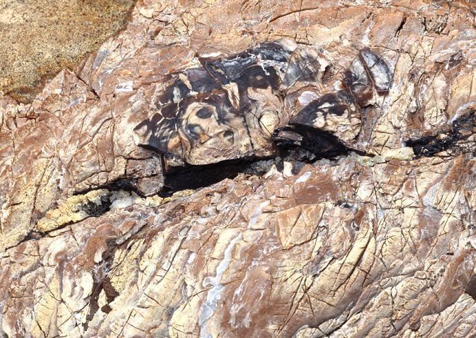 化石贴图材质素材图片3dmax材质