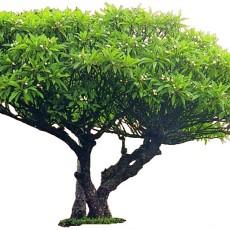 单棵树图片
