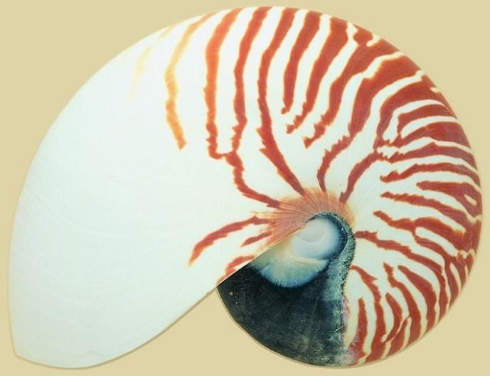 贝壳图片材质3dmax材质