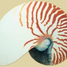 贝壳图片材质