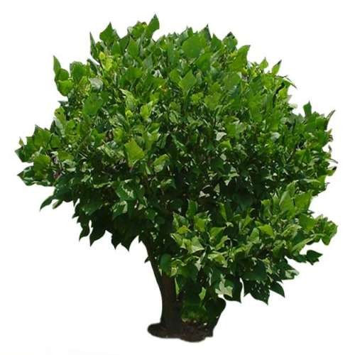 灌木材质3dmax材质