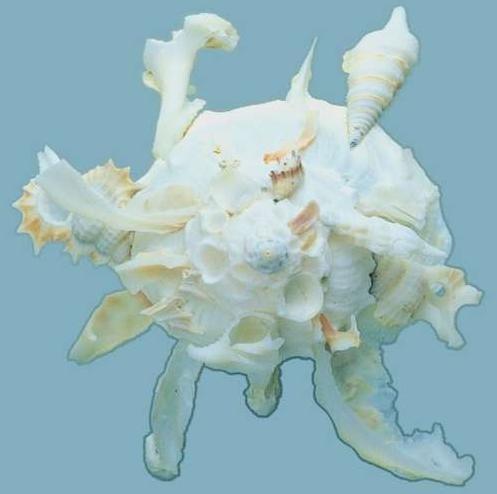 贝壳贴图3dmax材质