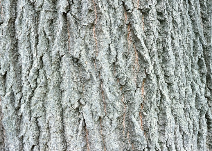 树皮贴图材质下载