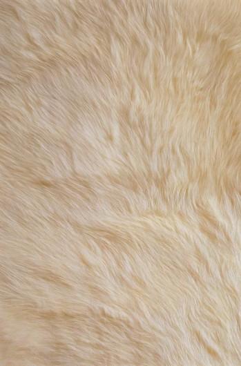 皮布毛贴图3dmax材质