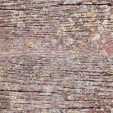 树木材质贴图下载-13289