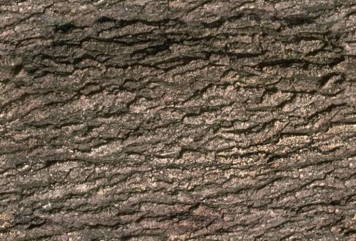 树皮贴图材质下载-13444