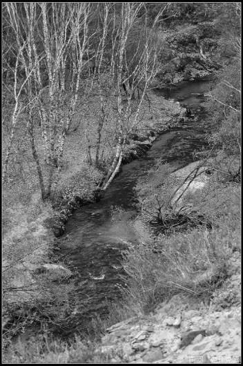 森林外景贴图下载3dmax材质