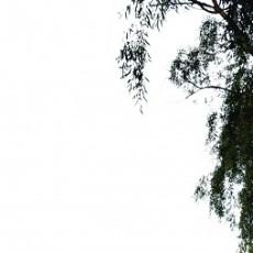 四季阔叶树