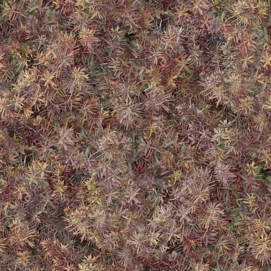 灌木图片6