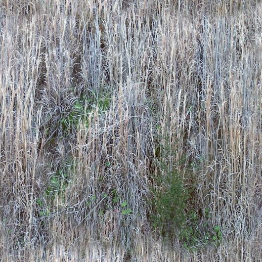 灌木贴图3dmax材质