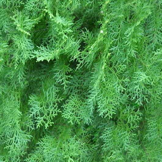 灌木图片3dmax材质