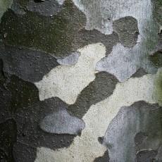 树皮3d贴图