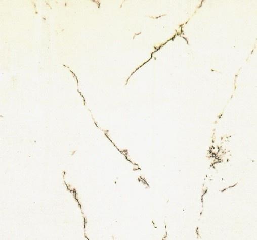 3d白色瓷砖贴图_白色瓷砖材质贴图