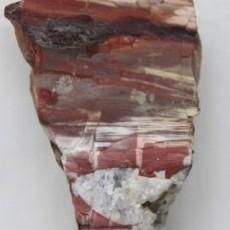 木化石图片4