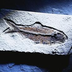 化石图片1