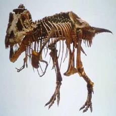 恐龙化石图片2