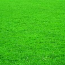 草坪貼圖_草坪材質貼圖