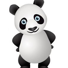 小熊猫图片大全下载