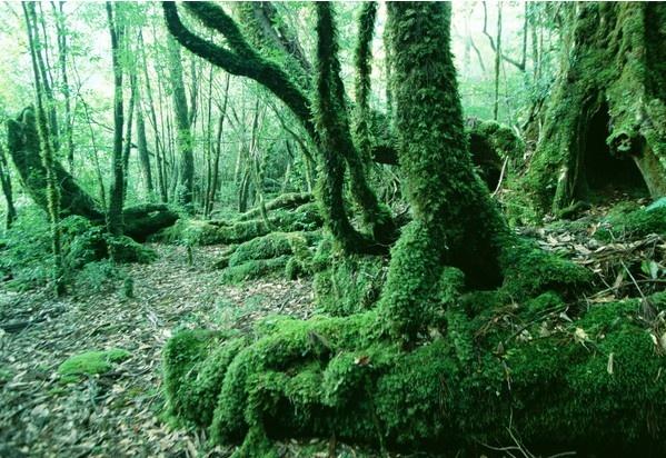 热带雨林图片免费下载