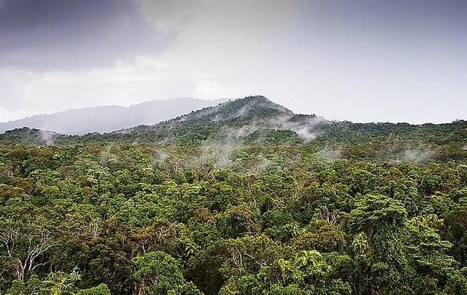 热带雨林图片