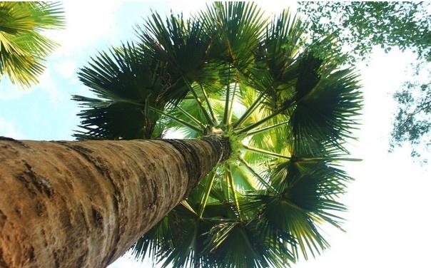 热带雨林图片大全下载
