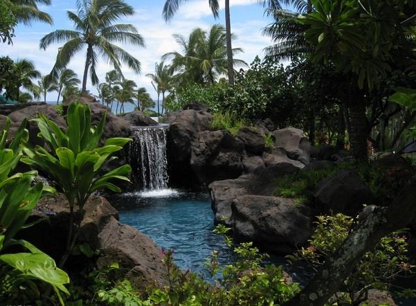 热带雨林图片下载
