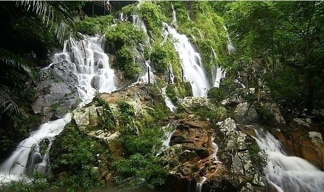 热带雨林图片_热带雨林图片大全下载