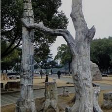 木化石图片