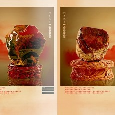 木化石图片_木化石图片大全下载