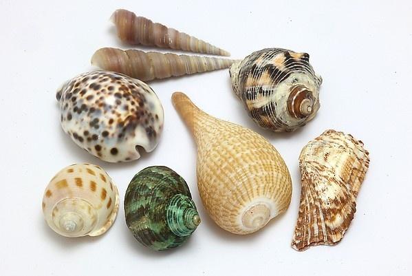 贝壳图片大全
