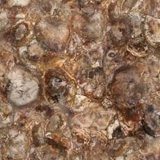 木化石图片下载