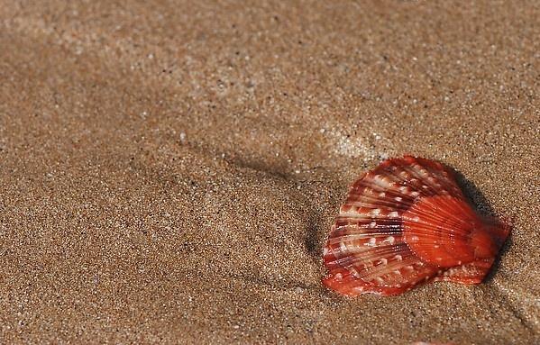 贝壳图片大全下载