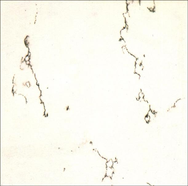 白色大理石材质贴图免费下载