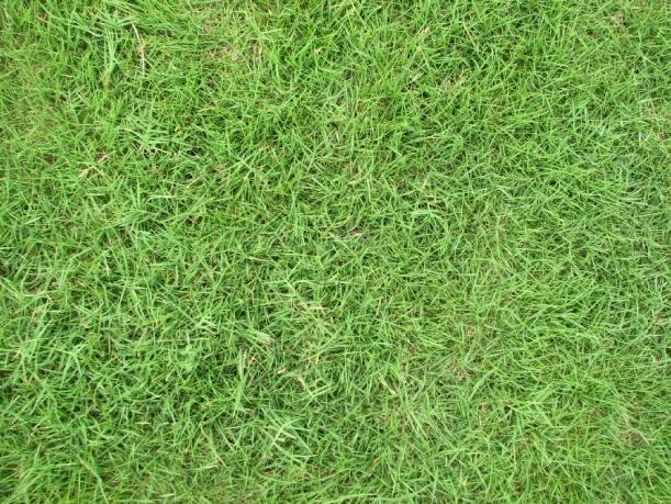 草坪贴图【22975】