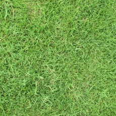 草坪貼圖【22975】