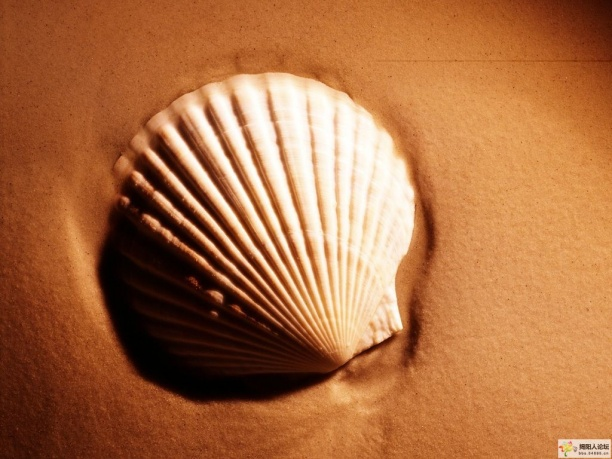 贝壳壁纸贴图3dmax材质