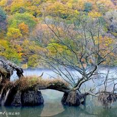 山水树木图片