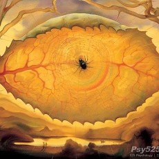 树叶眼睛【23802】