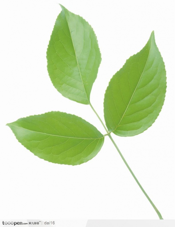 树叶贴图材质下载-24044