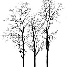 黑白树木图片【23560】