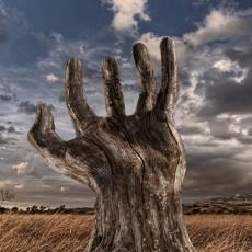 创意树木图片