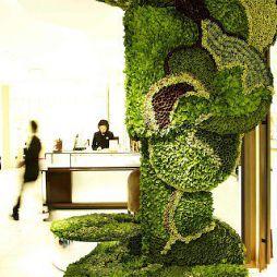 植物藝術812062