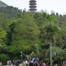 深圳仙湖植物园效果图库大全