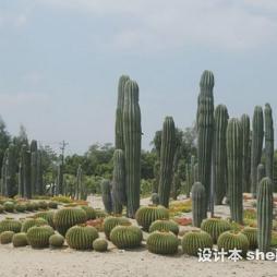 万石植物园效果图图片