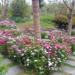 徐州植物园效果图