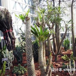 徐州植物园效果图片