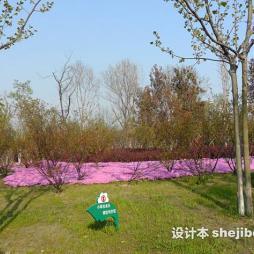 徐州植物园效果图集